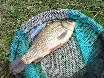 Как прикормить карася перед рыбалкой