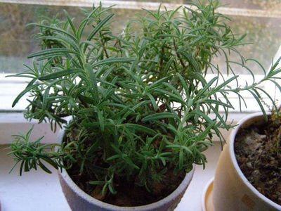 Какие растения очищают воздух в помещениях: позаботьтесь о своем здоровье