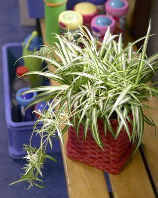 Комнатные растения для ленивых или занятых