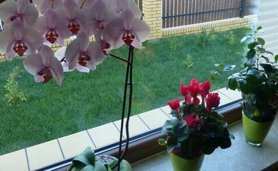 Комнатные растения – уход и борьба с вредителями с помощью домашних средств.