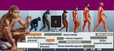 Потерянное звено эволюции человека открылось неожиданно тихо