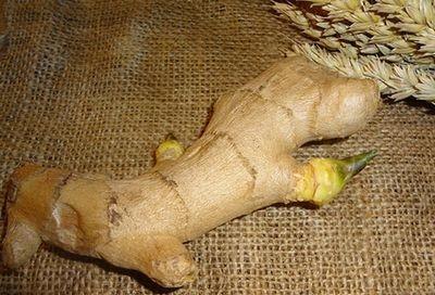 Урожай с огорода – корень имбиря